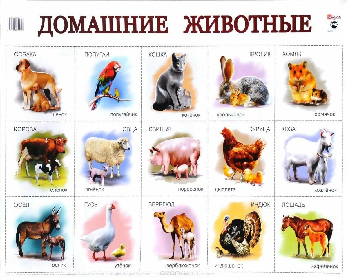 Своими, домашние животные с детенышами картинки для детей карточки