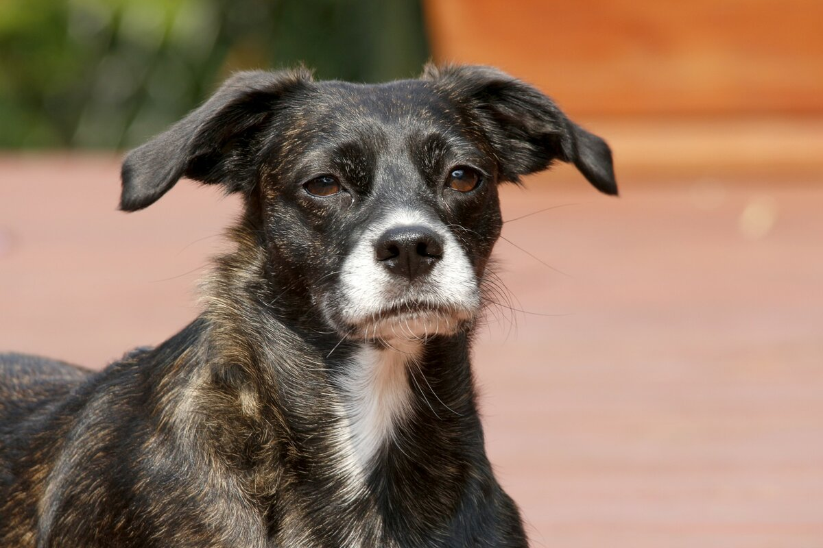 порода собак дворняжка фото дарите любовь тепло