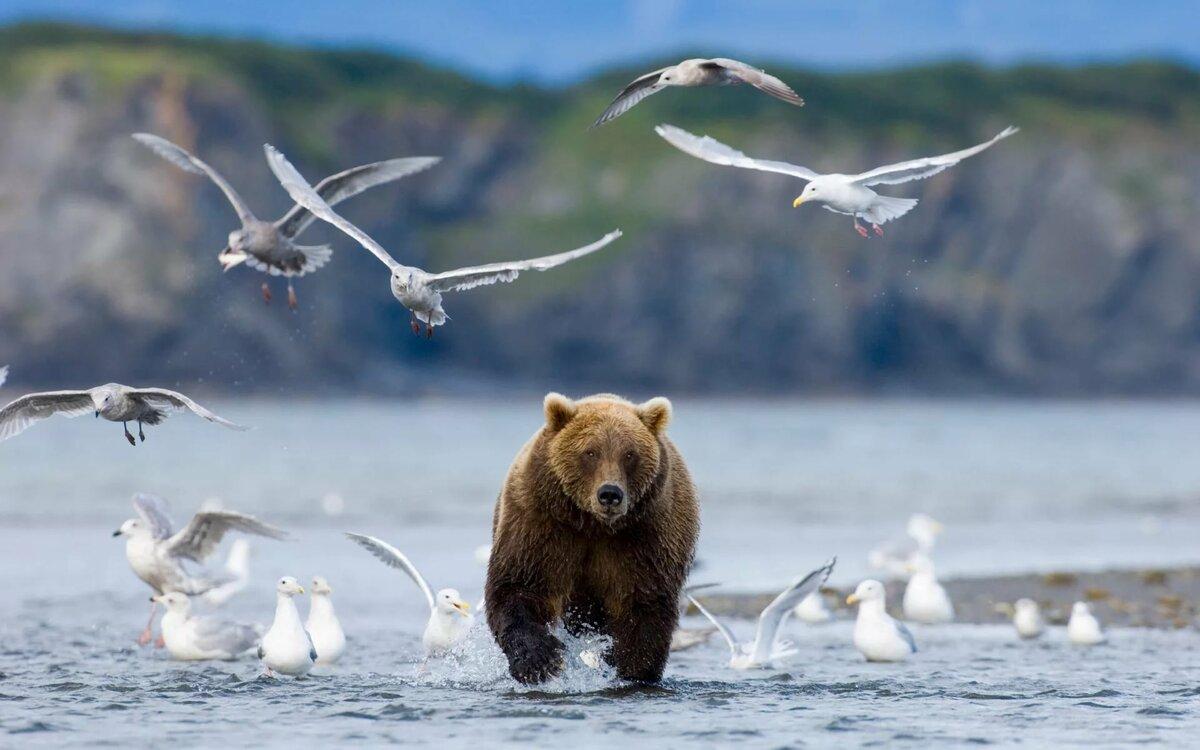 праздники фауна байкала в картинках без ума аппетитных
