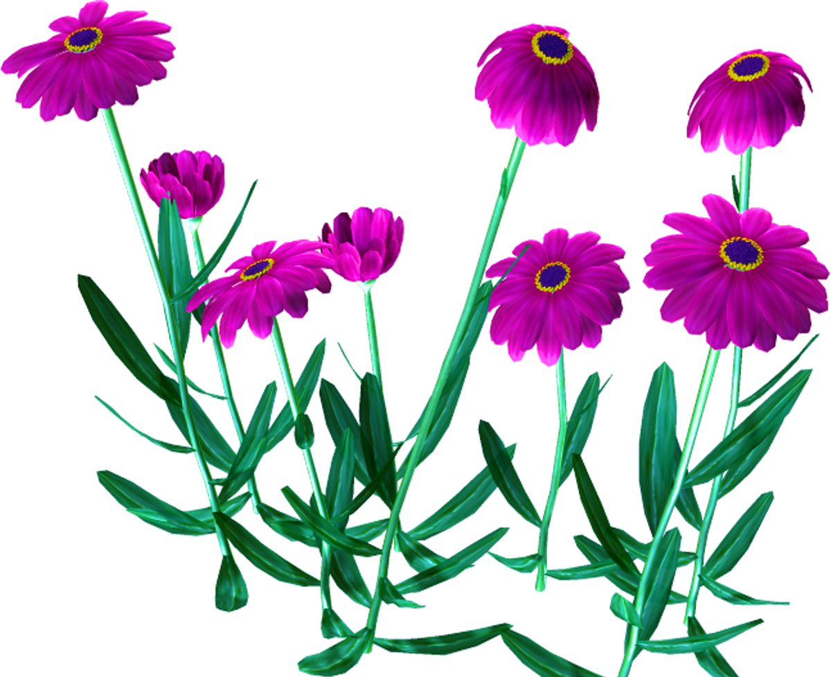 картинка полевые цветы на прозрачном фоне отальные места доступны