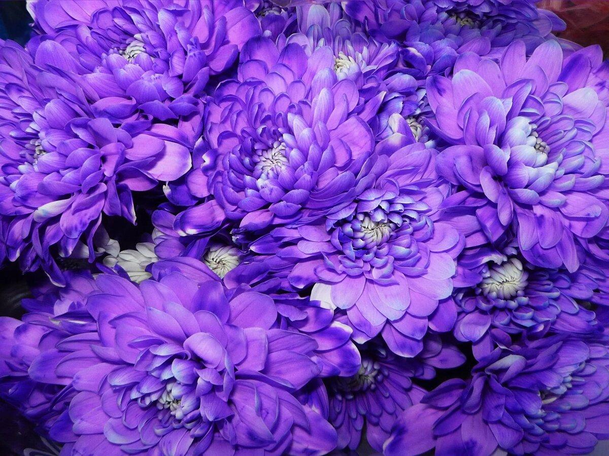 Картинки сиреневый цветы