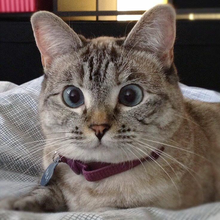 поделитесь кошка нала фото советуют