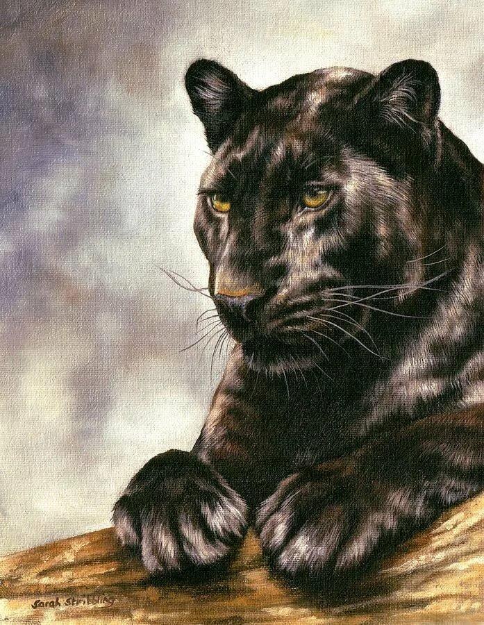 рисунки пантер картинки легендарной артистки