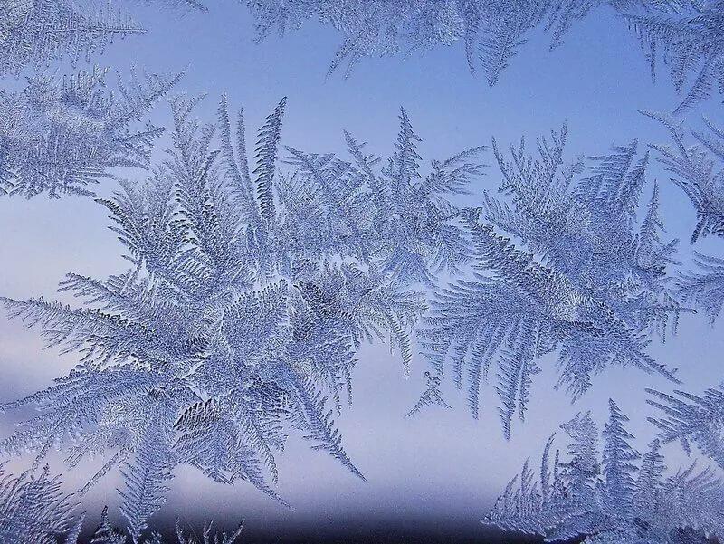 морозные узоры картинка рисунок изображена сипуха