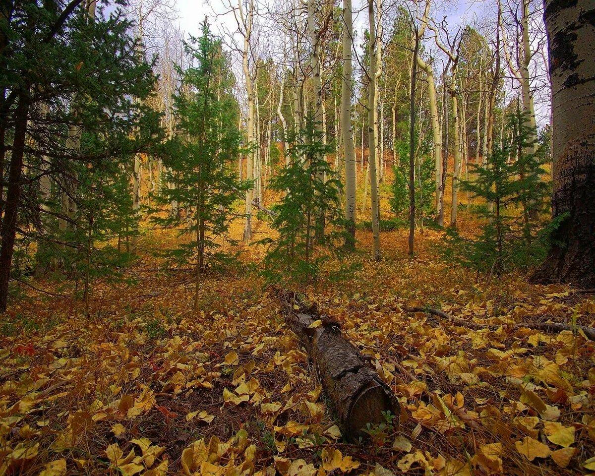Картинка для детей осень в лесу