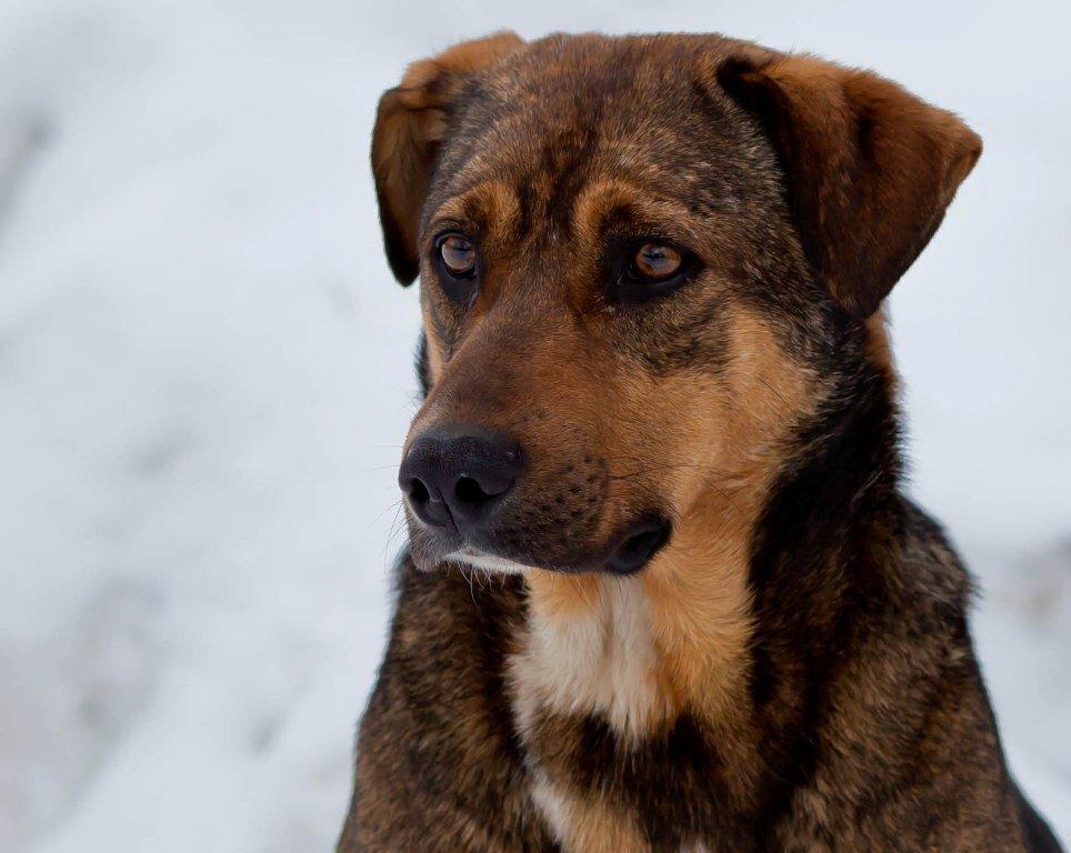 Беспородные собаки фото с названиями