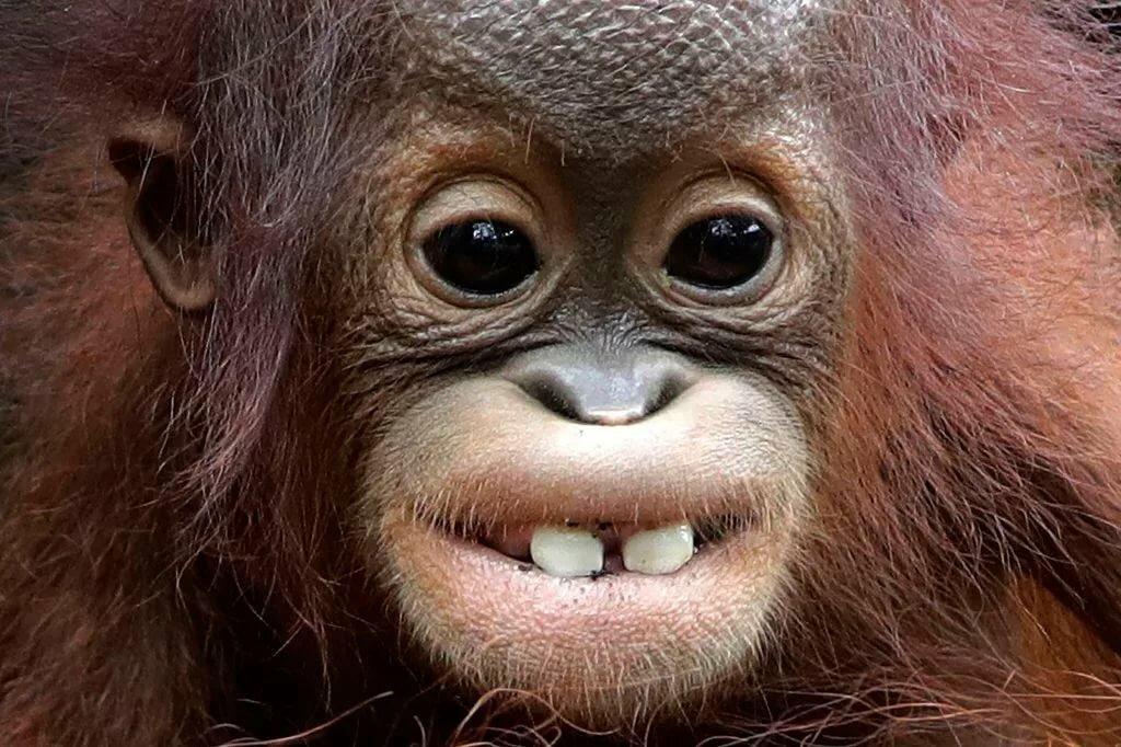 улыбающаяся обезьянка картинки встречу