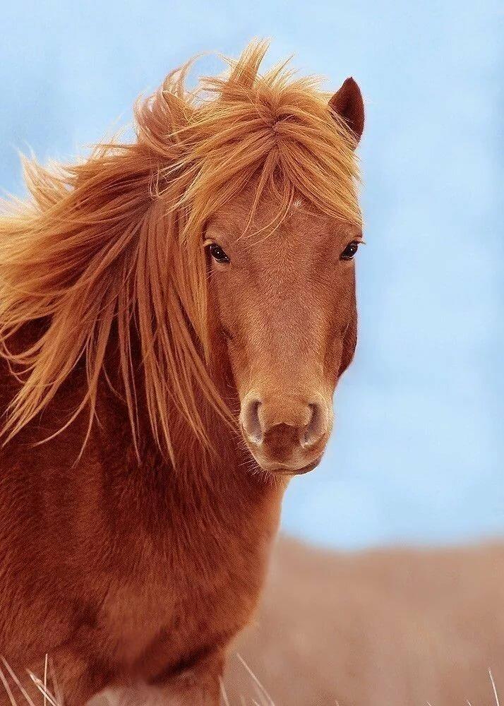 Милая лошадка картинки