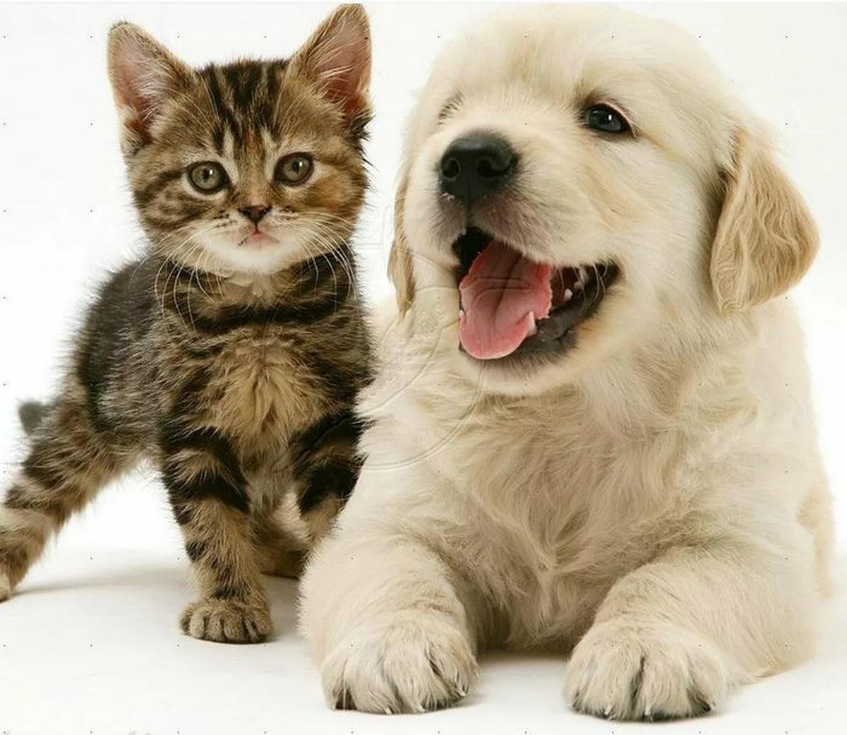 Картинки собачек с котами