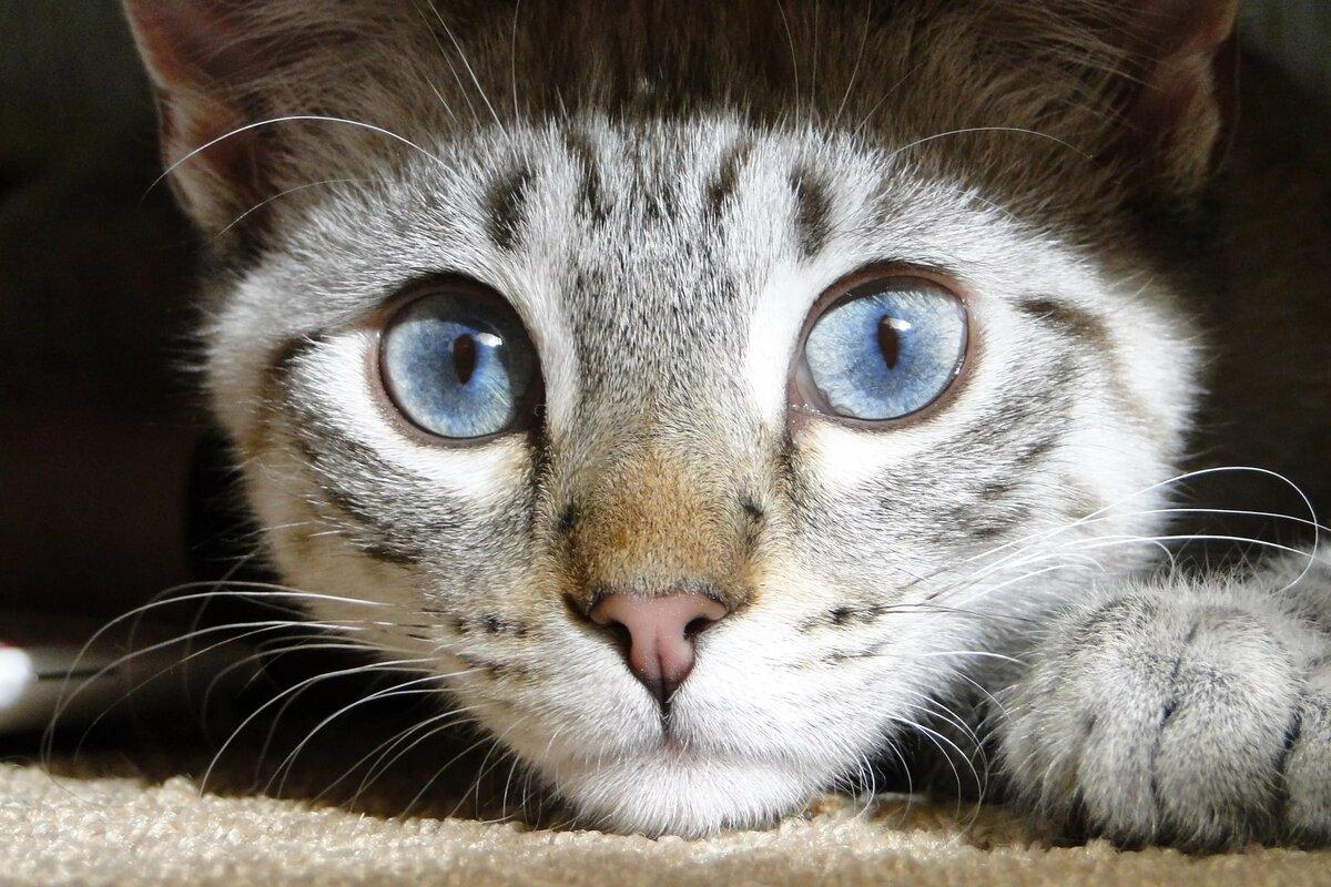 вообще картинки кошачьего взгляда нравятся эффектные