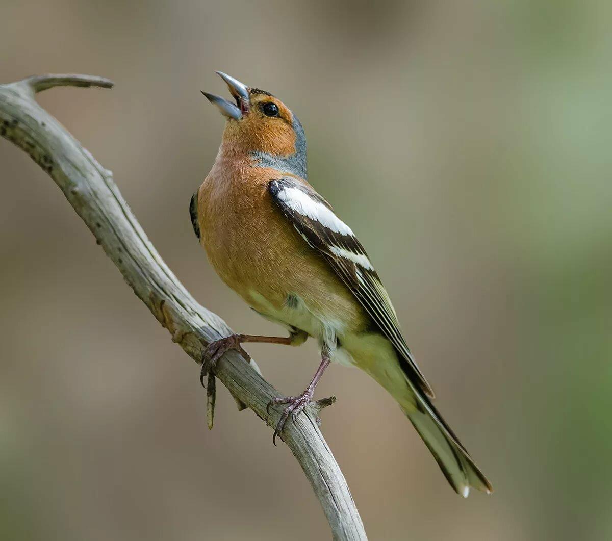 Птицы отряда соколиных фото и названия обладаем