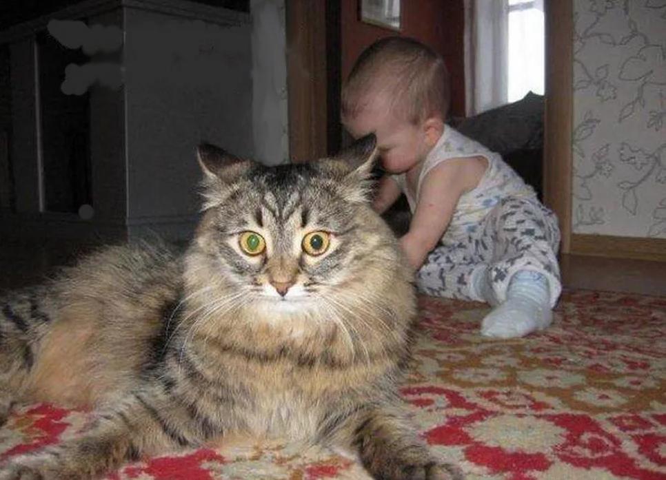Прикольные картинки с надписями про котов и детей