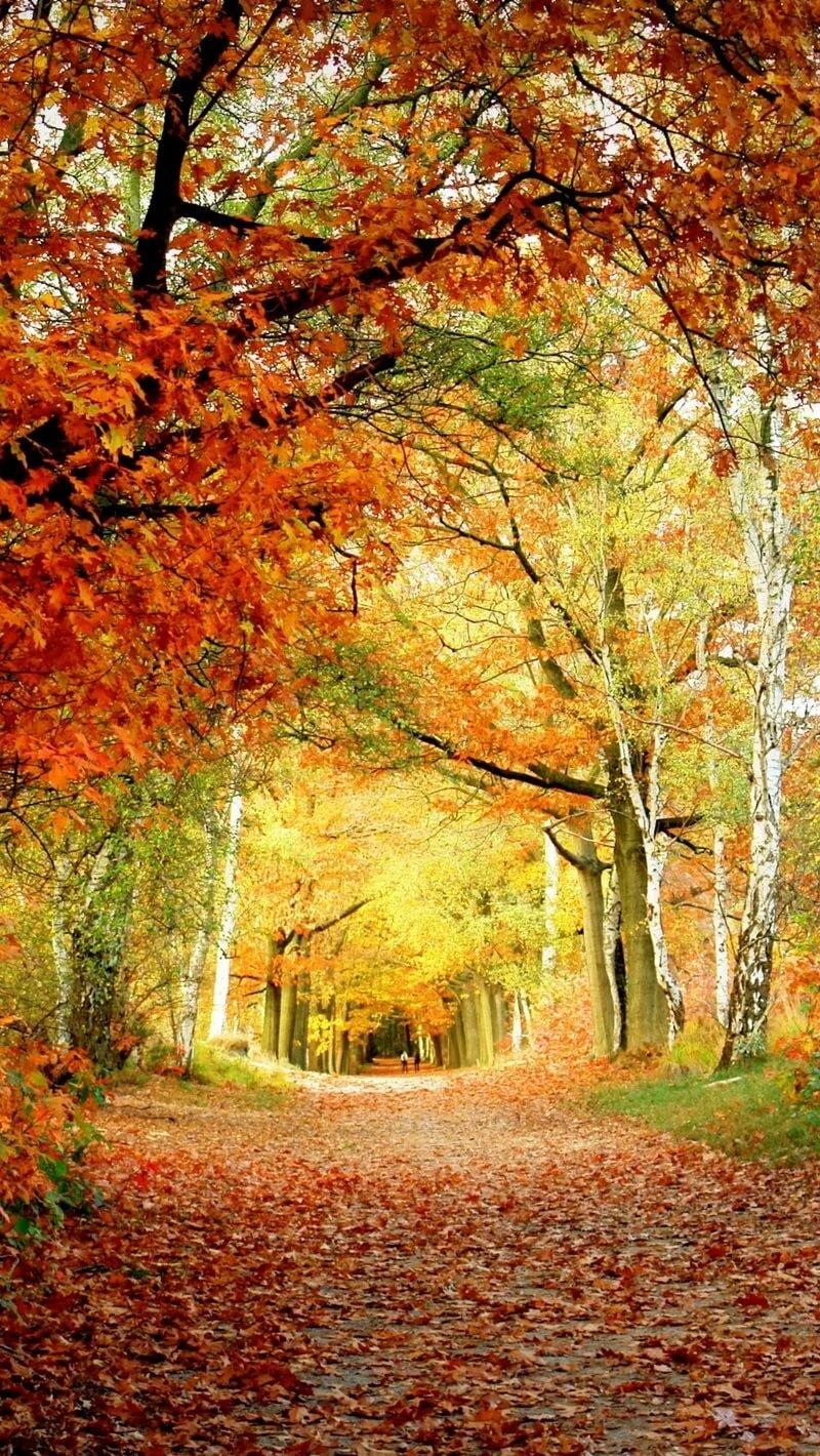 яркая осень картинки вертикальные