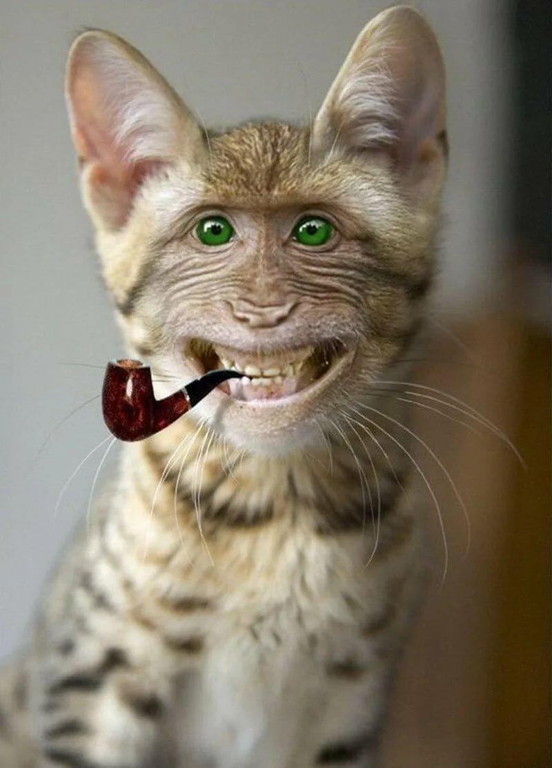 Железный человек, смешные коты фотки ржака