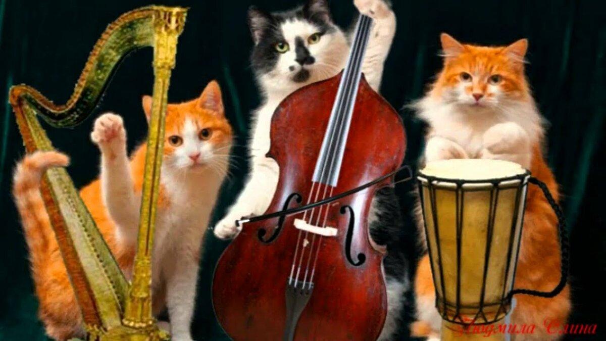 Поющие коты прикольные картинки