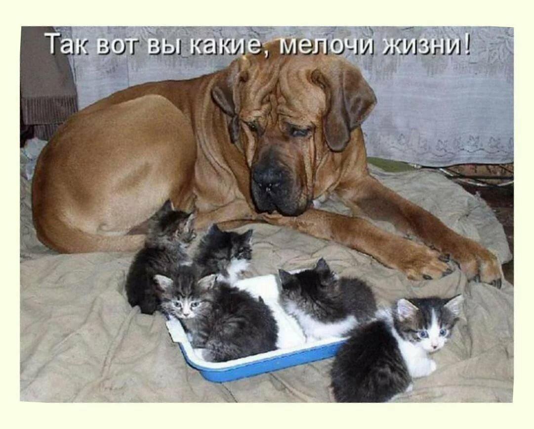 Меня, картинки щенят и котят с надписями