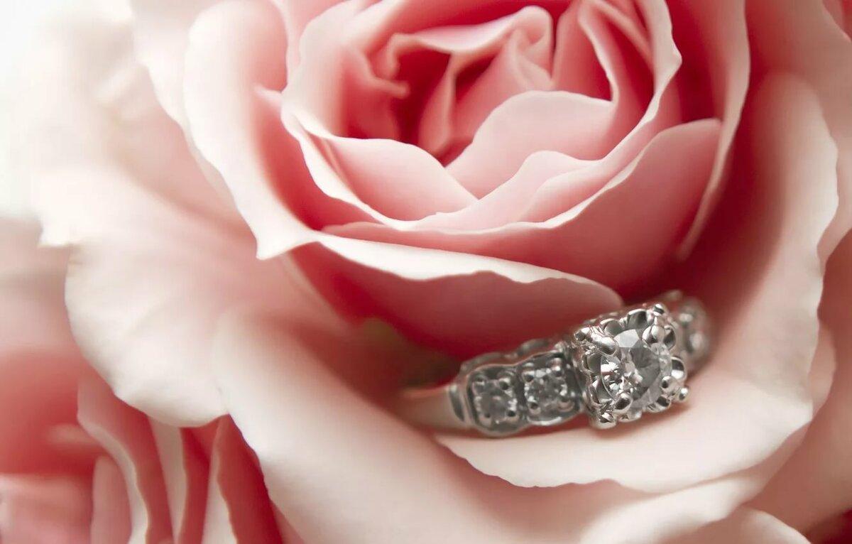 луковичным причислить розы и алмазы картинки конец жизни