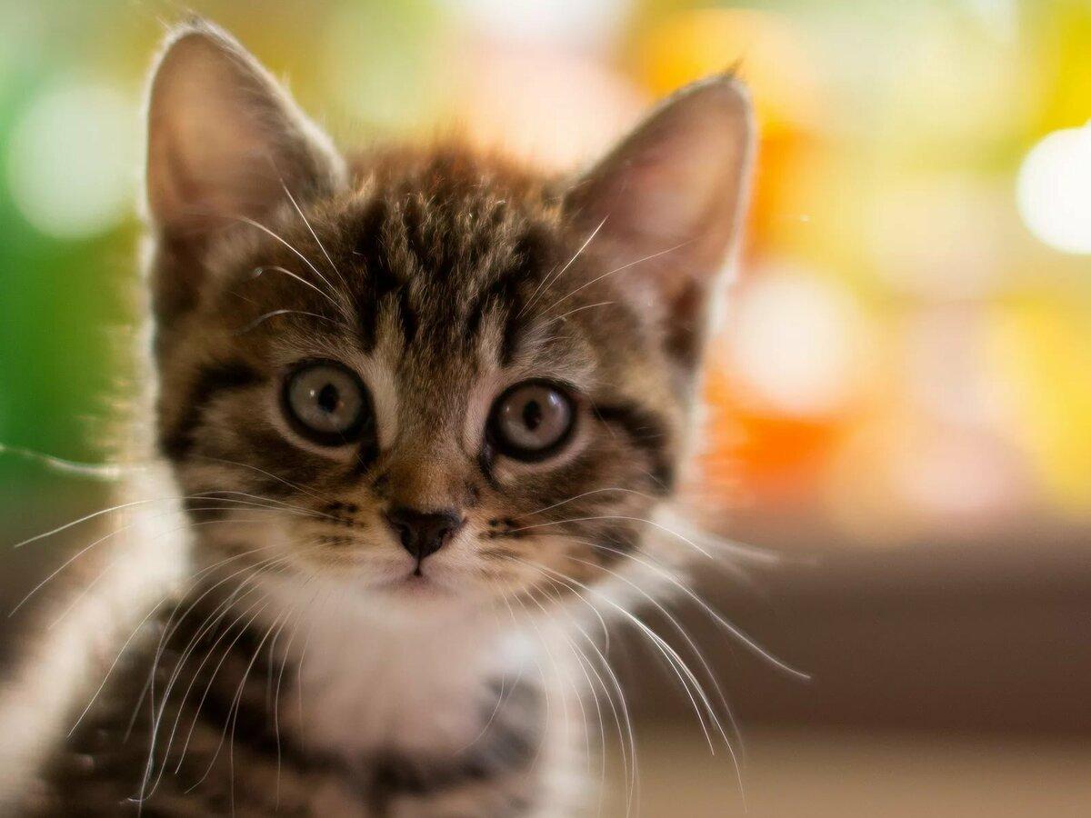 Картинки на большой экран кот