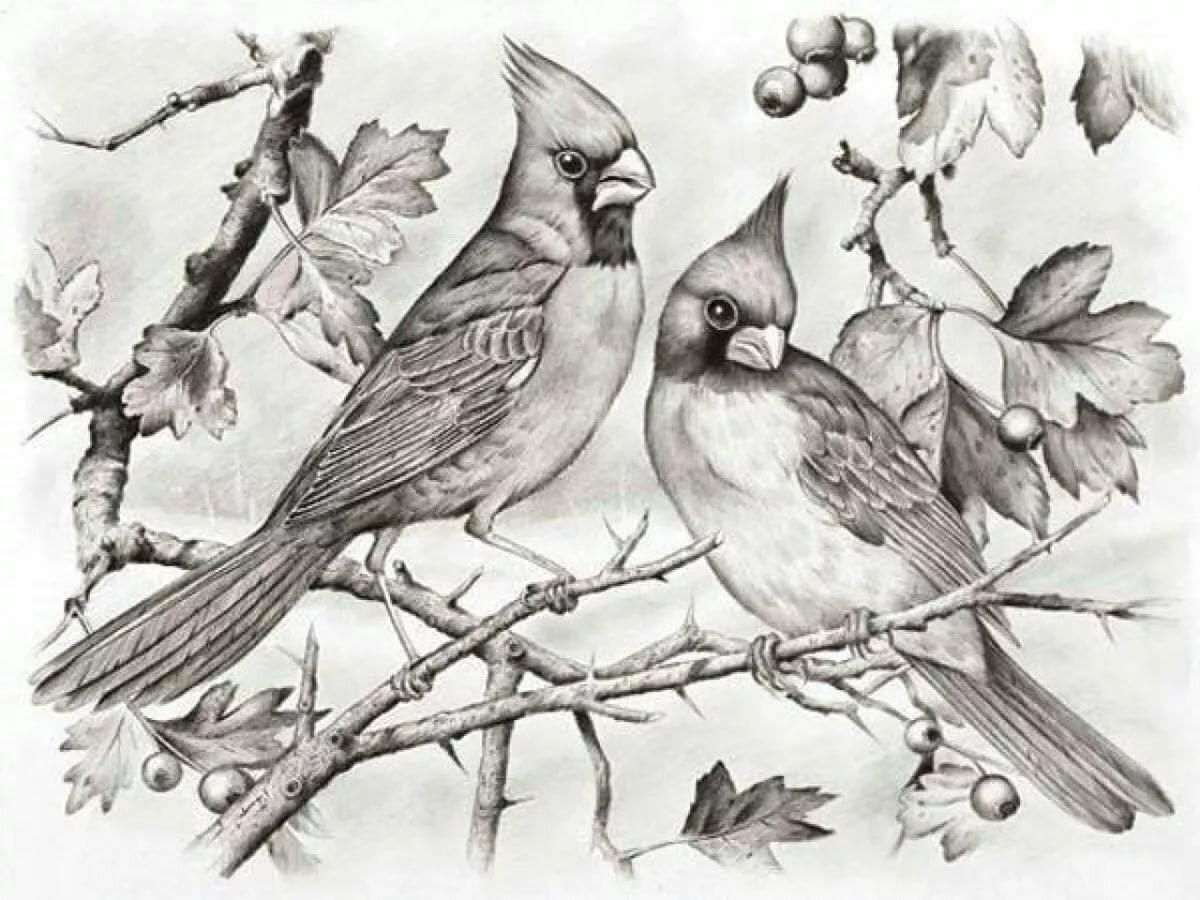 Жар птица фото картинки музыканты моей