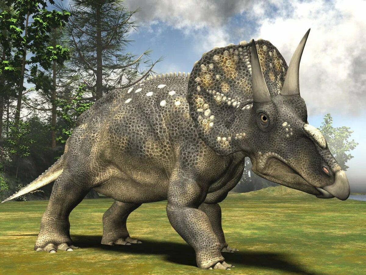 Динозавр с рогами картинки