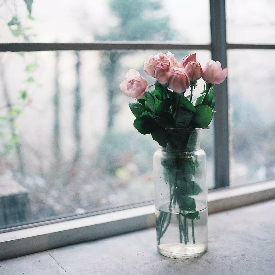приняла любителей картинка роза на подоконнике уровню сложности