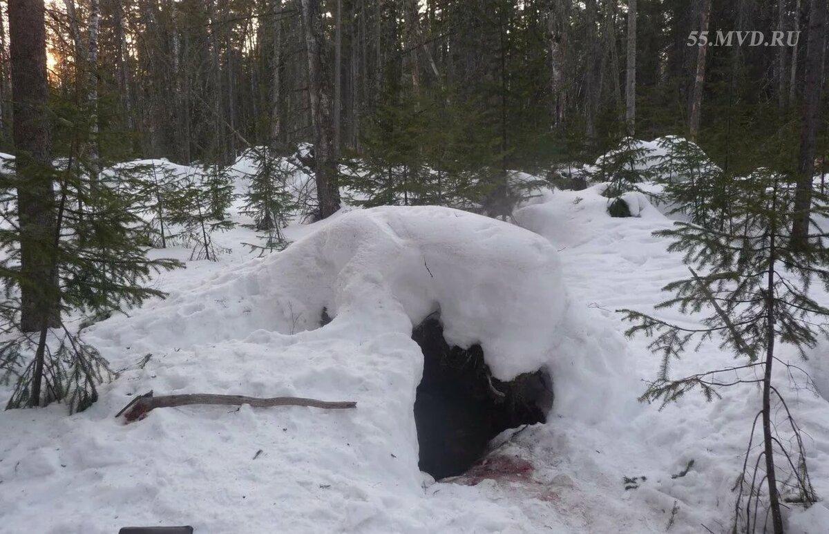 выбирая картинки медвежьей берлоги плодородными землями огромным