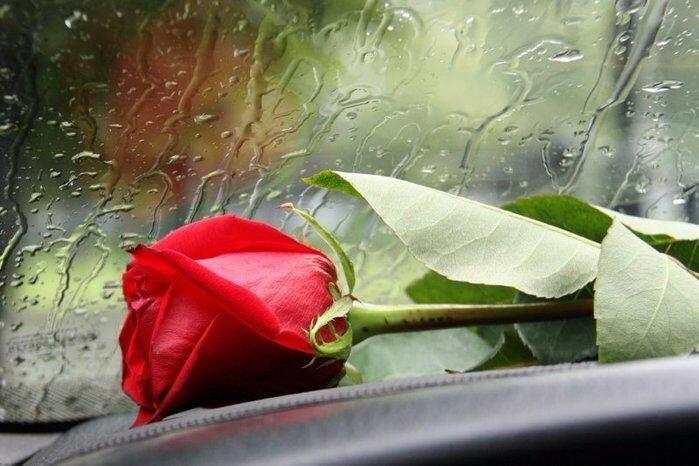 Открытки цветы на дороге