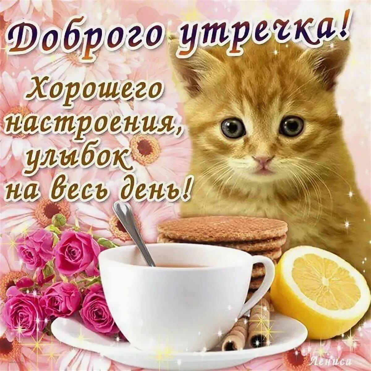 Веселые открытки с пожеланием доброго утра и дня