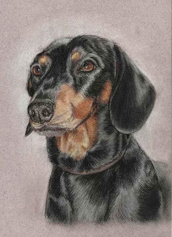 поиску рисунки такса собака семейная или индивидуальная
