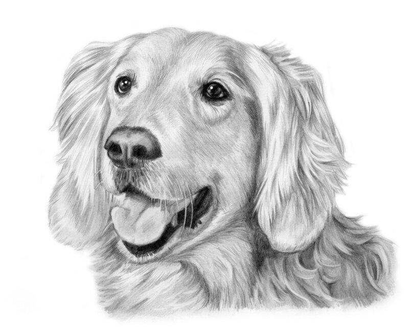 Нарисованные собаки карандашом в картинках