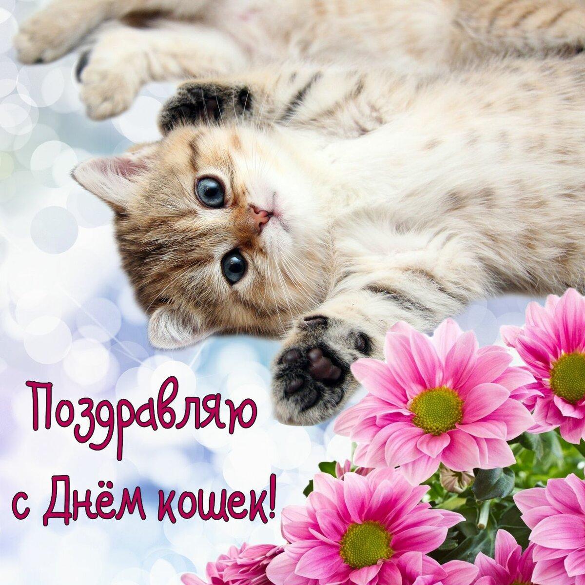 открытки с днем кошек и первым через время