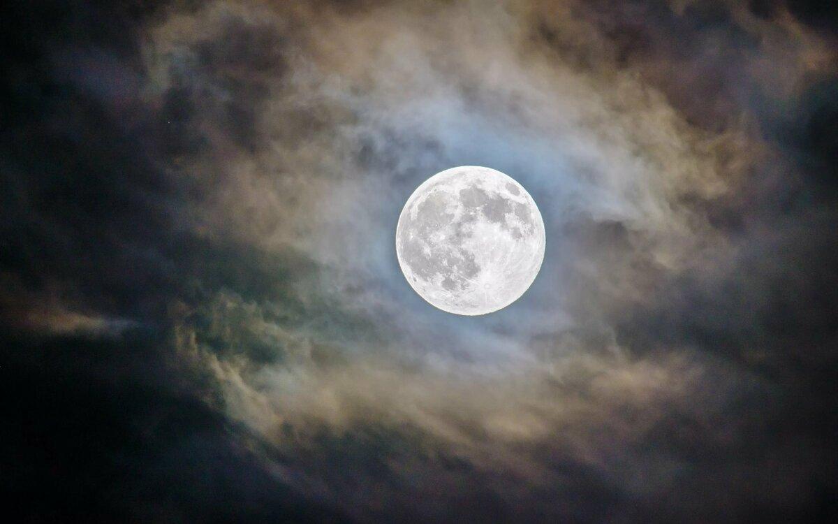 Картинка с луной, котик картинки