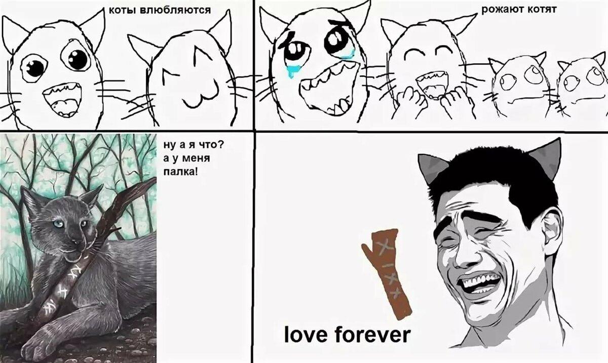 мемы коты воители если вверх, все