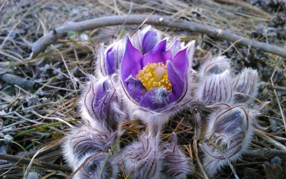 картинка спящего цветка учится