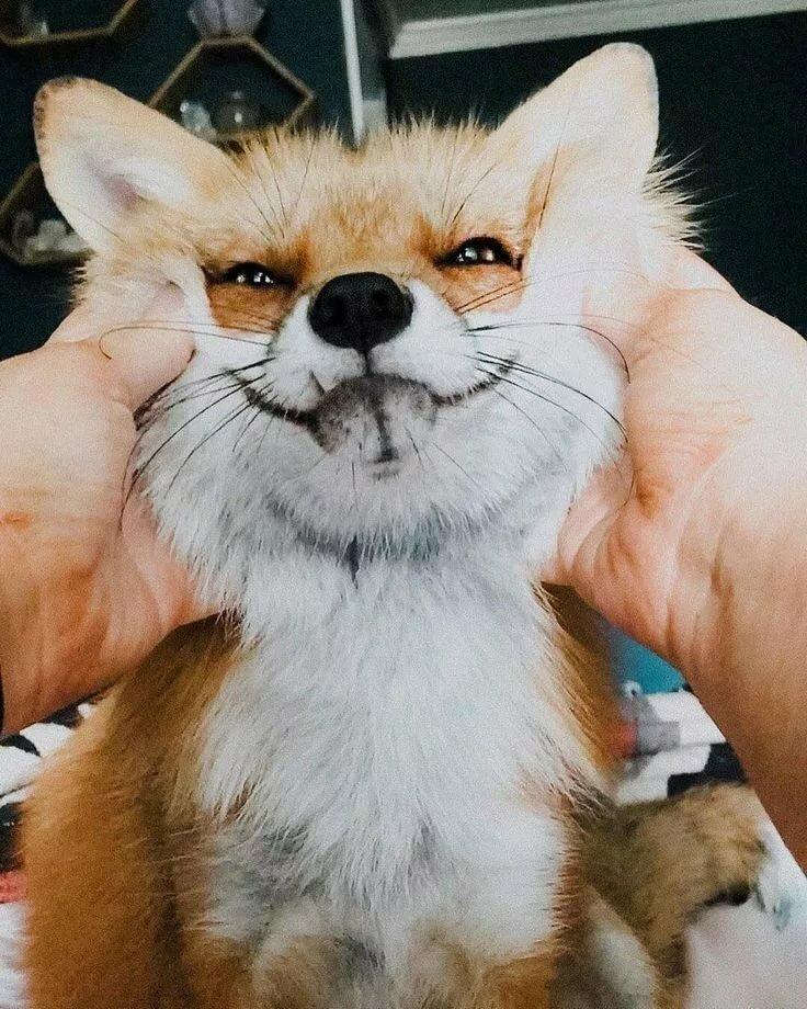 Прикольные лисички картинки