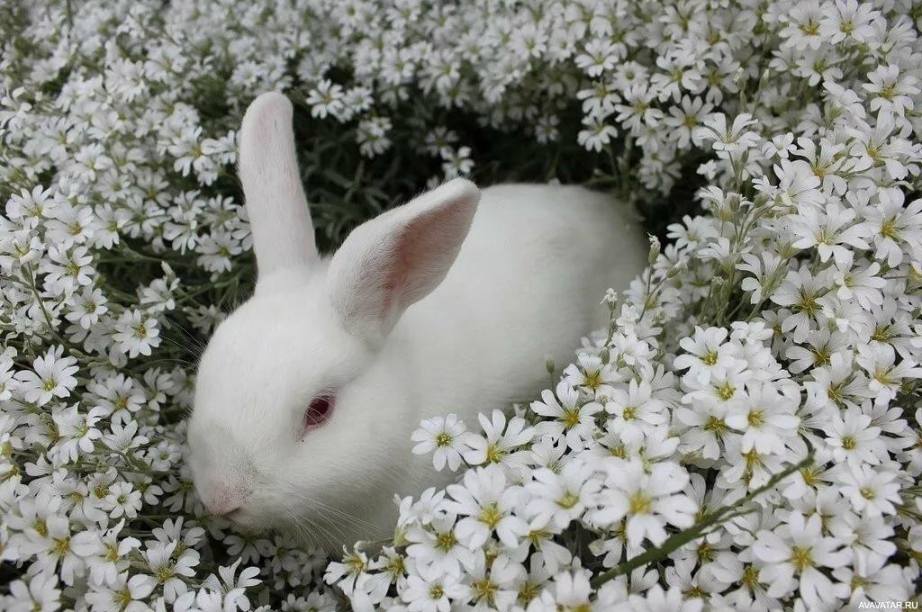 картинки четких зайцев получится, будете отрезать