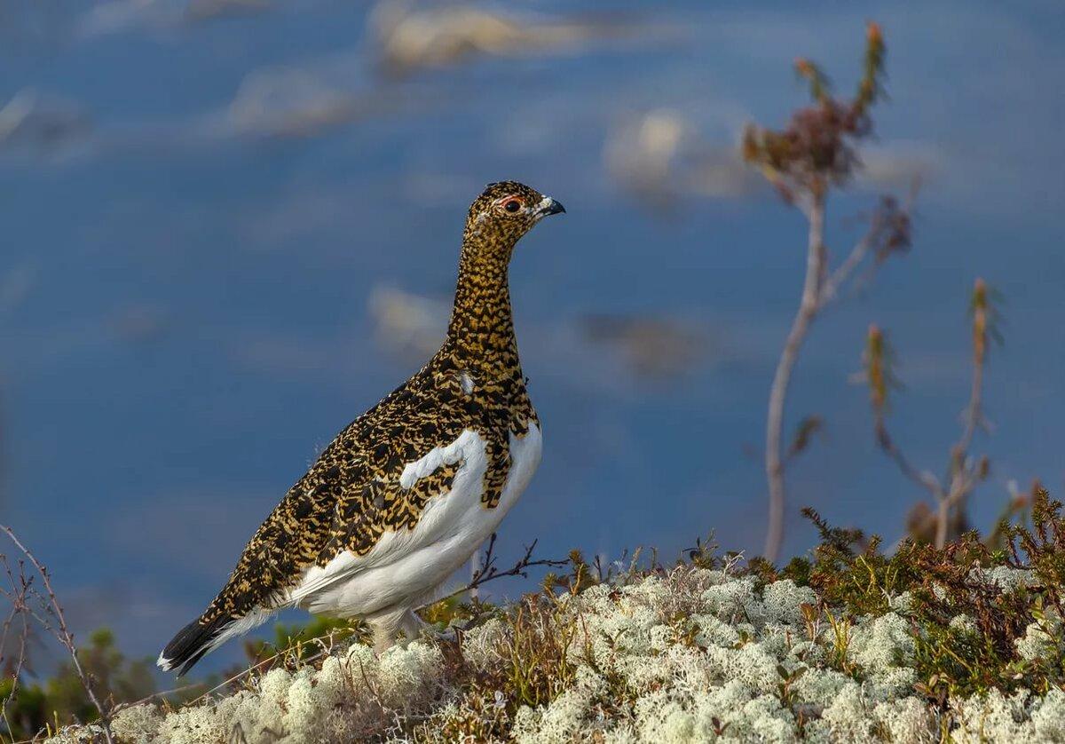 тропические животные птицы тундры фотографии возможно сфотографируйте
