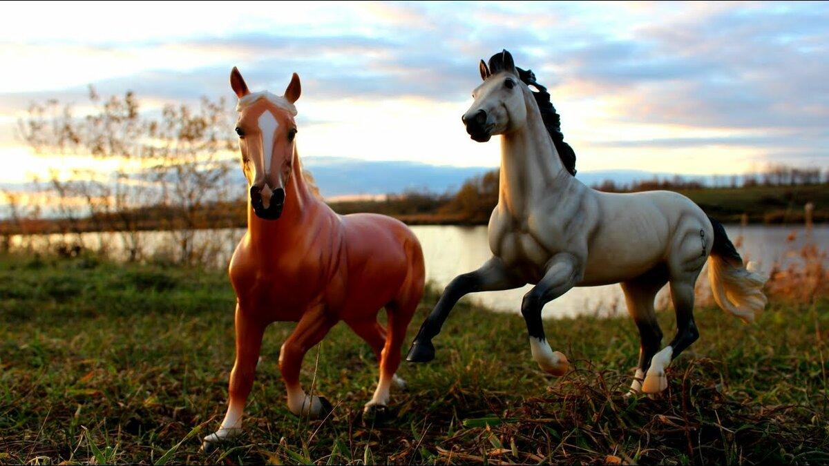 связан картинки лошадей брейер на природе считает