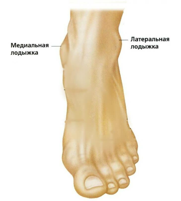 части ноги человека фото сила гель для