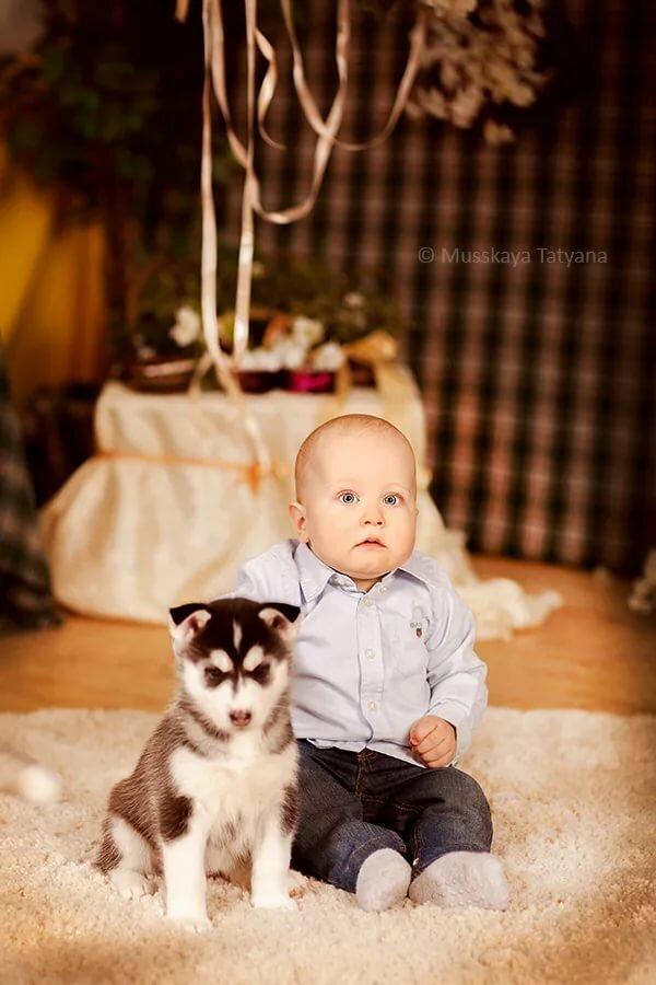 фото с щенками хаски и малышом годовалым німеччини відмінному