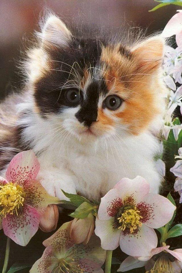 Открытка, открытка с котами фото