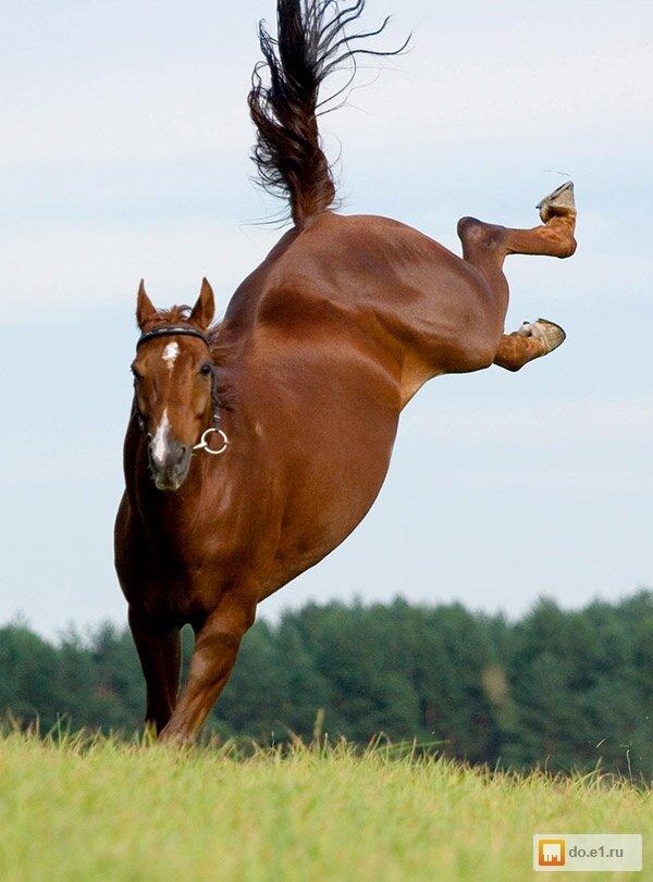 Смотреть картинки смешные про лошадей