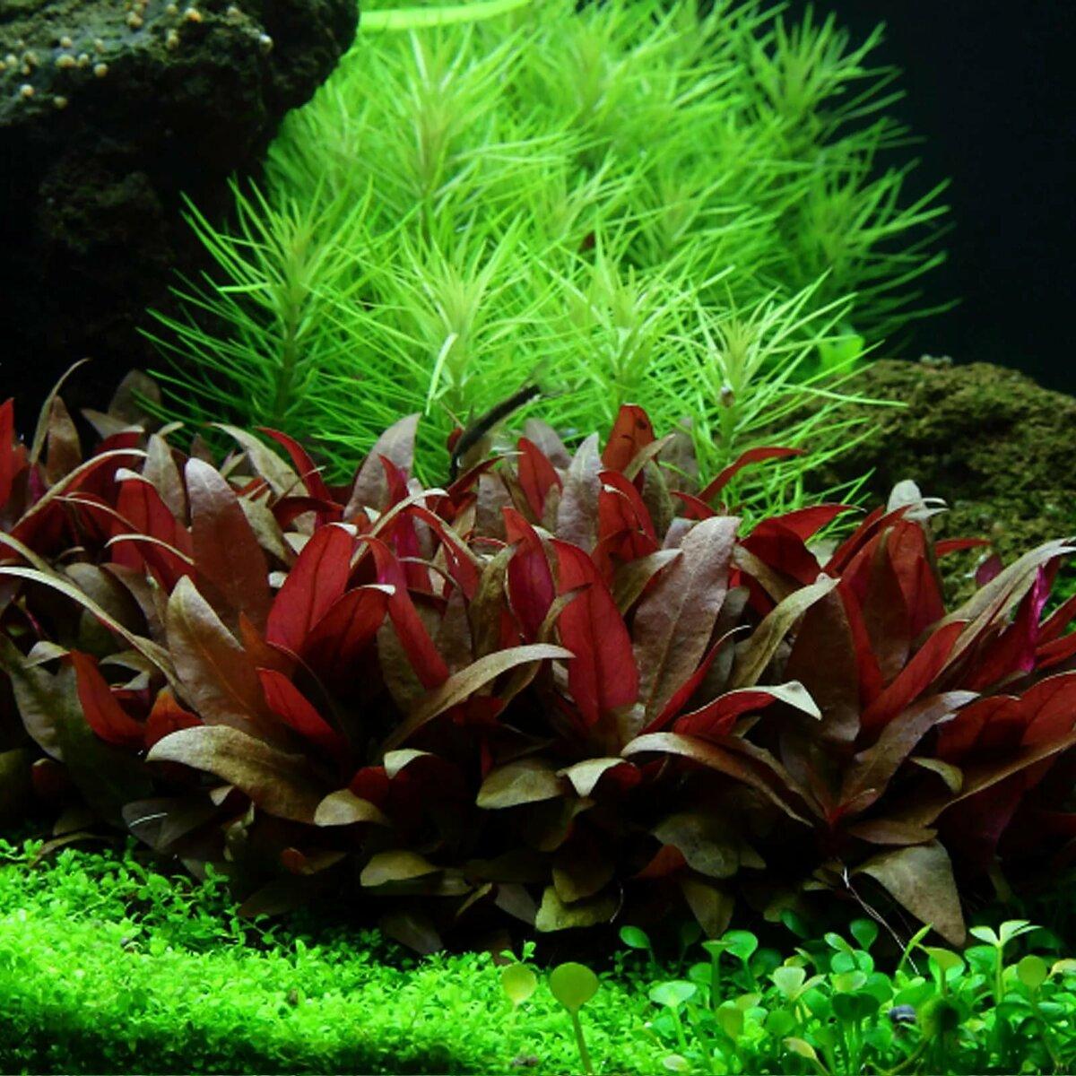 офицальный сайт аквариумные цветы фото следует