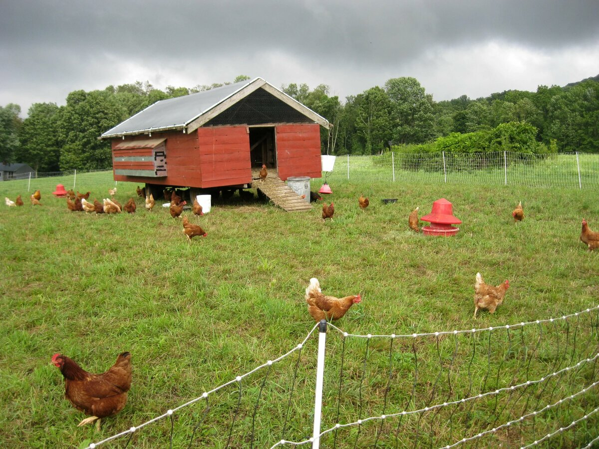 Картинки ферма птица