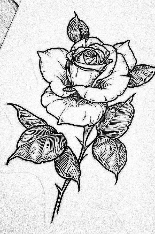 Эскизы розы картинки