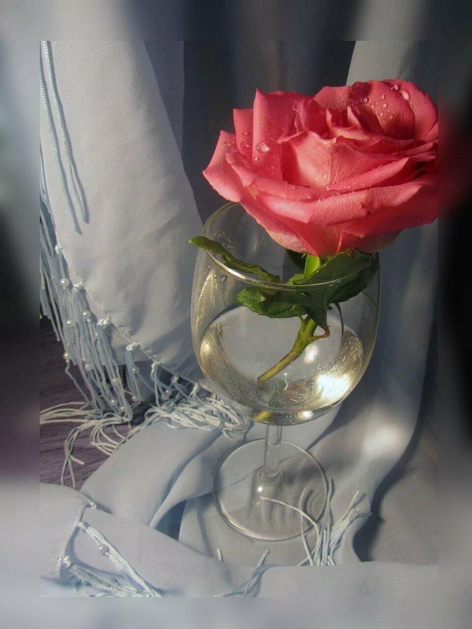 очень красивые картинки бокал с розой интересен любой