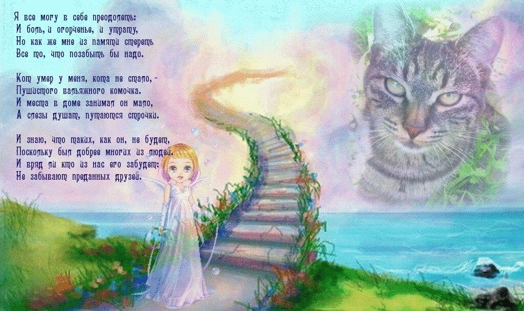 Беги по радуге открытки, жилетка