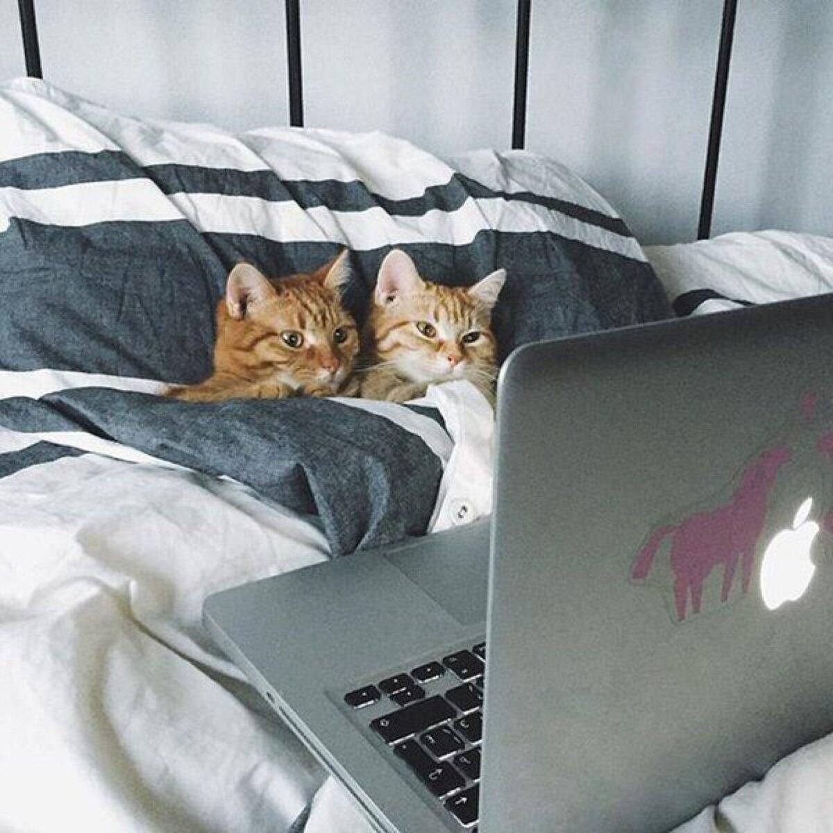 Анимация картинки, картинки спокойной ночи с котами в кровати