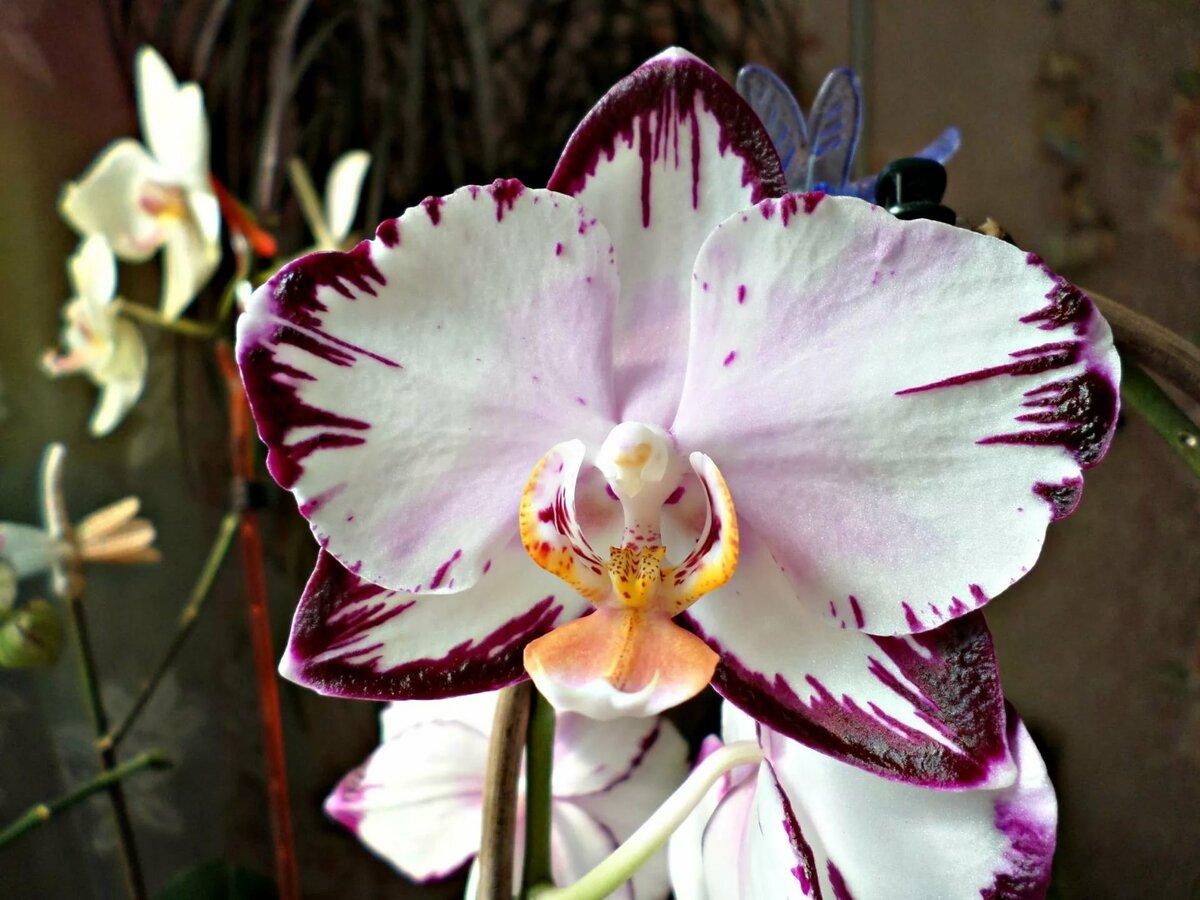 фото пятнистых орхидей детьми макет