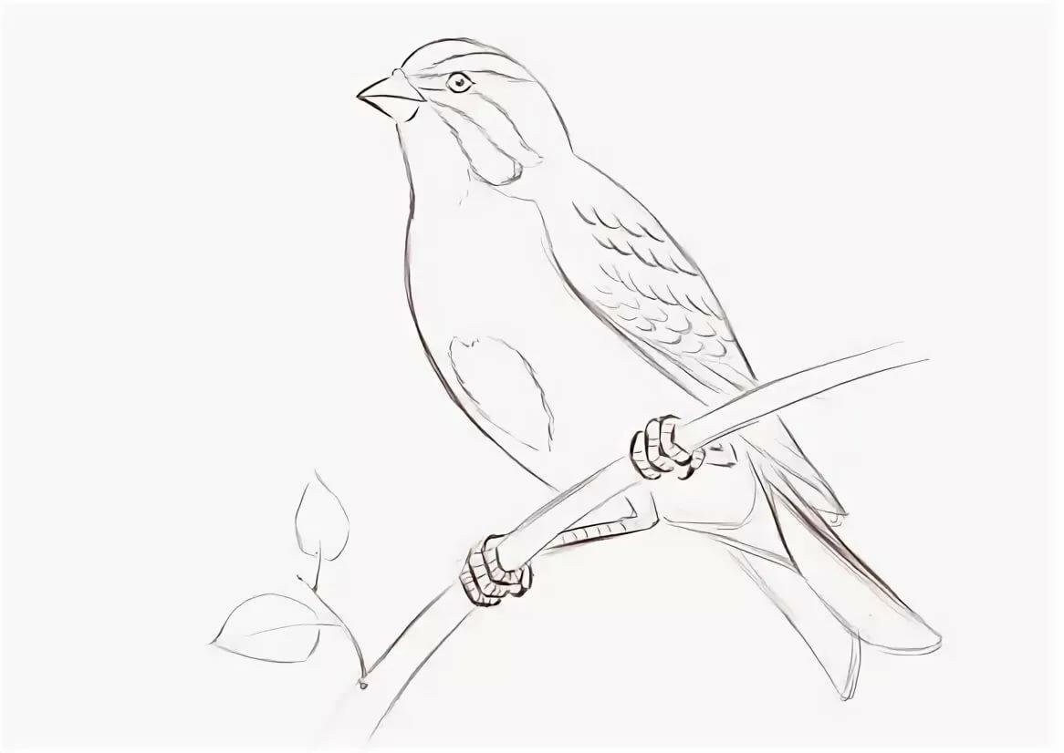 Картинка для срисовки птичка